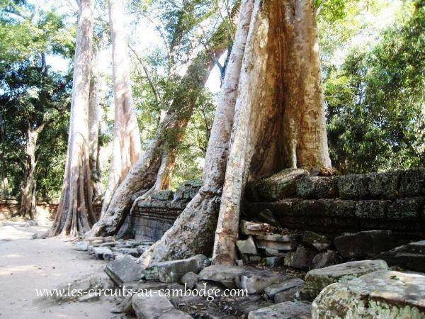Temple Ta Phrom Temple Angkor 36