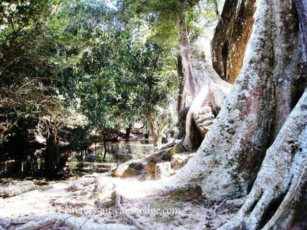 Temple Ta Phrom Temple Angkor 37