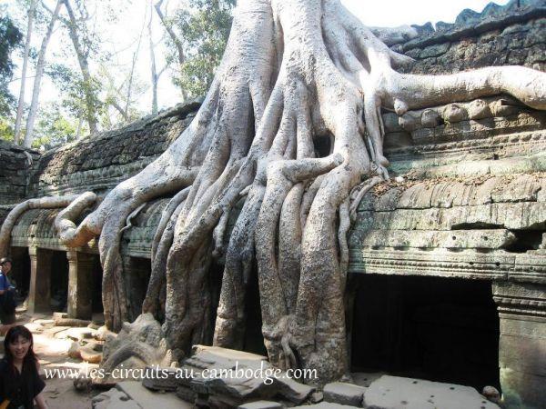 Temple Ta Phrom Angkor 31