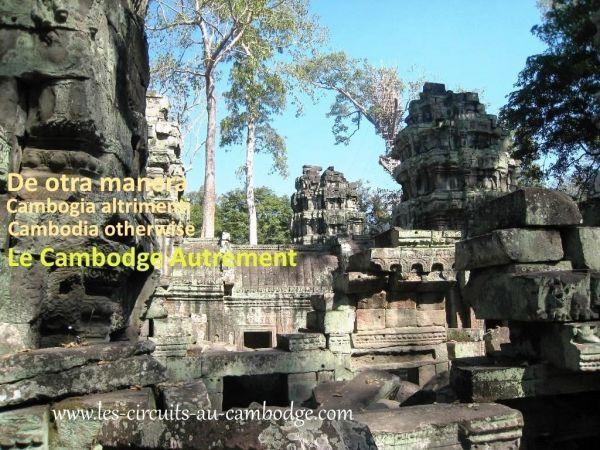 Temple Ta Phrom Angkor Temple Angkor 39